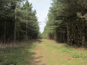 Lovely woodland path