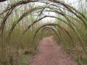 The willow tunnel