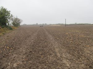 The ploughed fields last year...