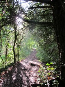 The path by the Navigation