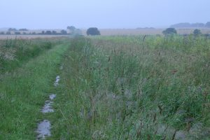 Misty, rainy wet path