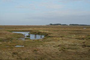 Stiffkey salt marshes