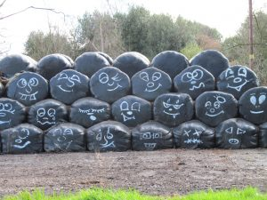 Silage bales with character!