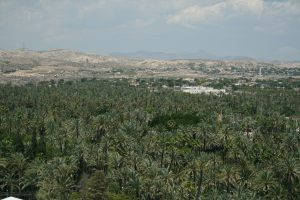 Elche palm tree groves from the Basilica