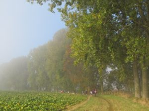 Autumn mists and colours