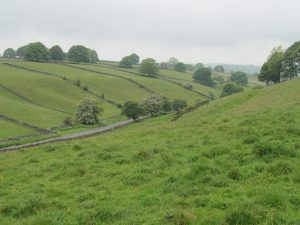 Fields, walls and valleys