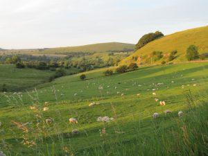 Evening light- approaching Alstonefield
